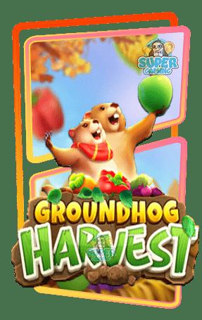 สล็อต Groundhog Harvest